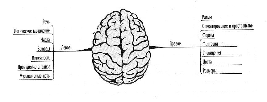 1420535687_kak-razvivat-polushariya-mozg